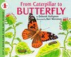 Used FROM CATERPILLAR TO BUTTERFLY ( Let's-Read-And-Find-Out ) (1ST ed.) (USED)